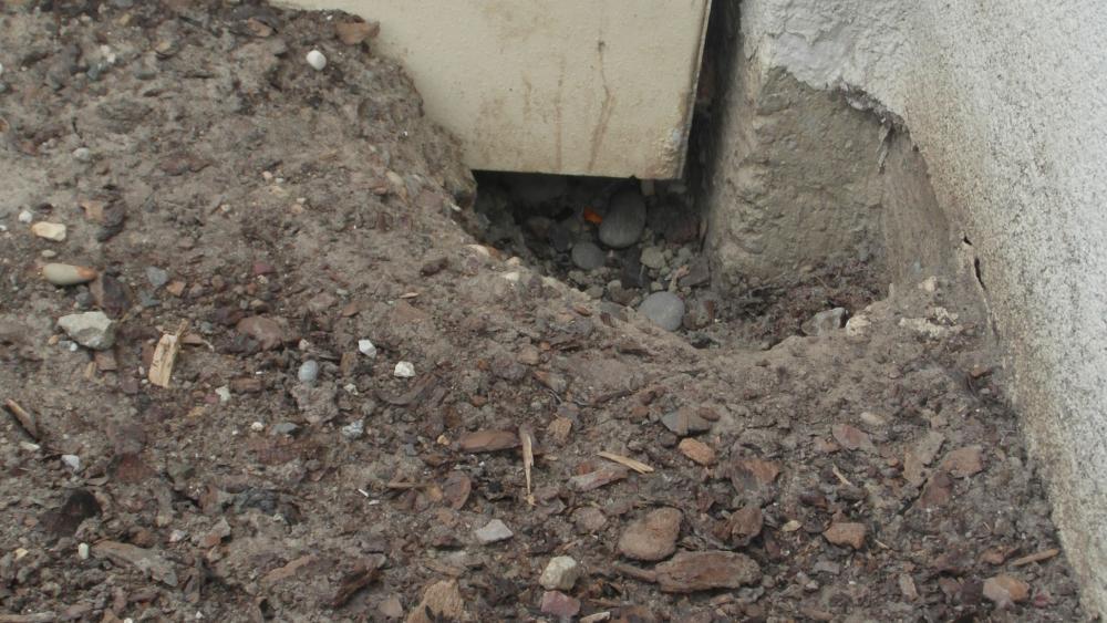 Rue de Bribeauval, les rats creusent des trous directement au pied des immeubles.