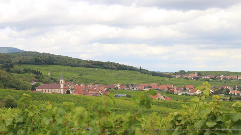 Le domaine d'Hubert Metz comprend 51 parcelles sur 10 hectares.