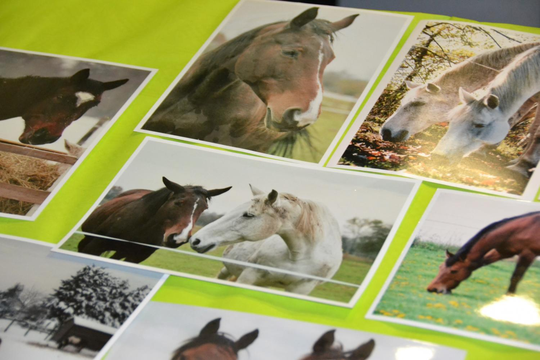 Actuellement, l'association gère 9 chevaux retraités ou réformés, et garde un oeil sur 4 équidés placés en famille d'accueil.