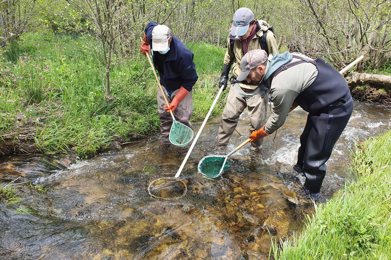 Pour évaluer l'impact d'une pollution au lisier, la Fédération de la pêche de la Haute-Loire compte les poissons qui restent