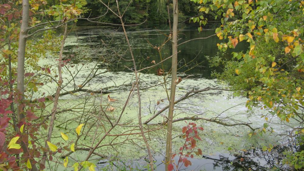Les étangs situés dans la forêt de la Robertsau attirent promeneurs, pêcheurs et naturistes.