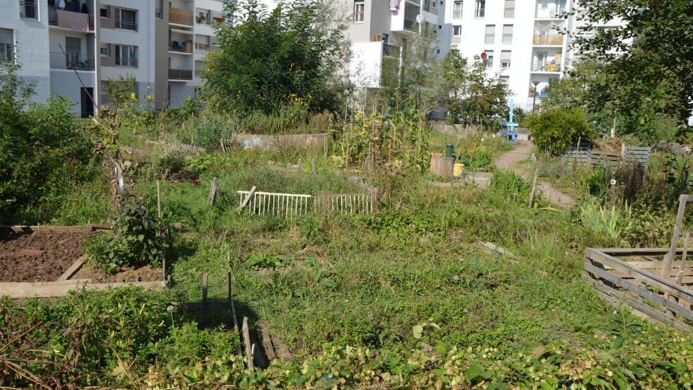 Le jardin partagé de la maille Jacqueline créé en 2009 et ses 45 parcelles rectangulaires et individuelles pour la plupart.