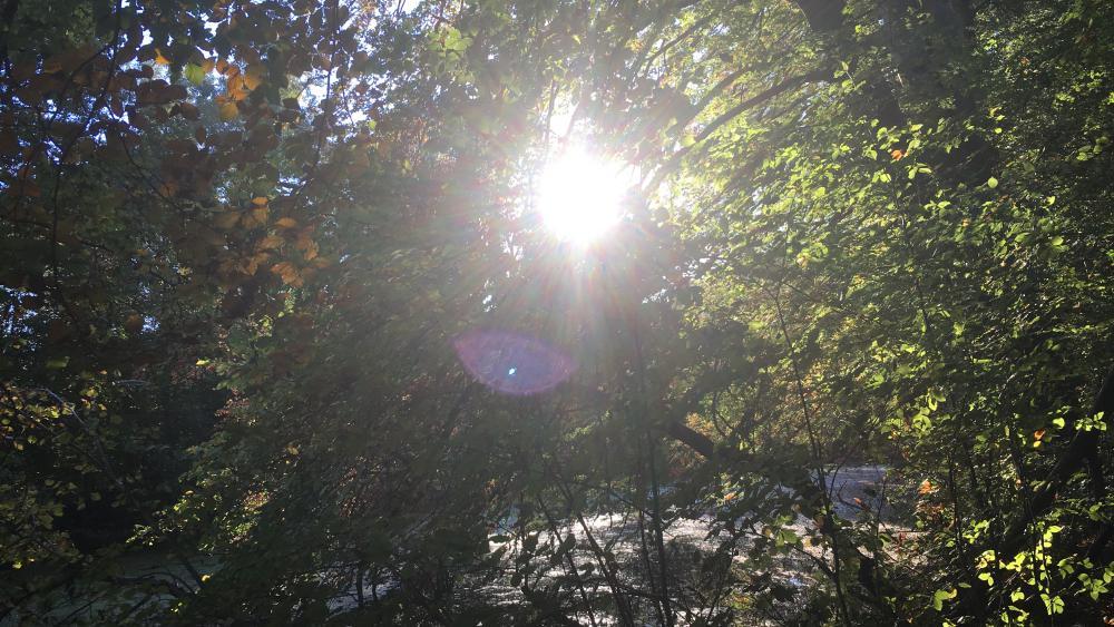 La chaleur du soleil, les feuilles qui tombent, le craquement des branches... il suffit de tendre l'oreille, ou l'oeil.