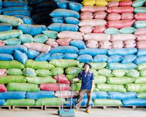 Vietnam, la nature à rude épreuve